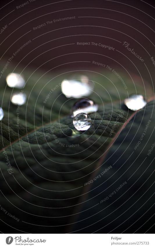 perlige Sache Pflanze Wassertropfen Regen dunkel einfach Flüssigkeit nass grün violett Farbfoto Außenaufnahme Makroaufnahme Menschenleer Tag Zentralperspektive