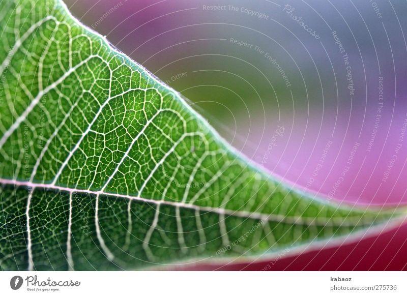draussen Natur grün Pflanze Blatt Erholung Wärme Zufriedenheit rosa Lebensfreude Wohlgefühl harmonisch Grünpflanze