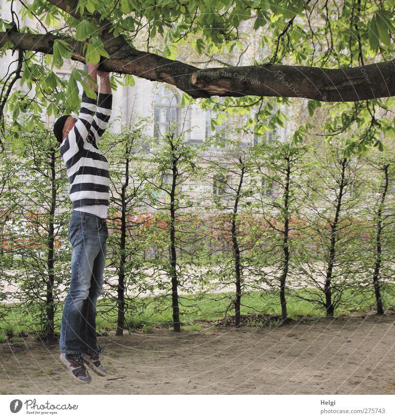 Mann in Jeans und gestreiftem Pulli hängt mit den Armen an einem dicken Ast Freizeit & Hobby Mensch Erwachsene Leben 1 45-60 Jahre Natur Pflanze Baum Sträucher
