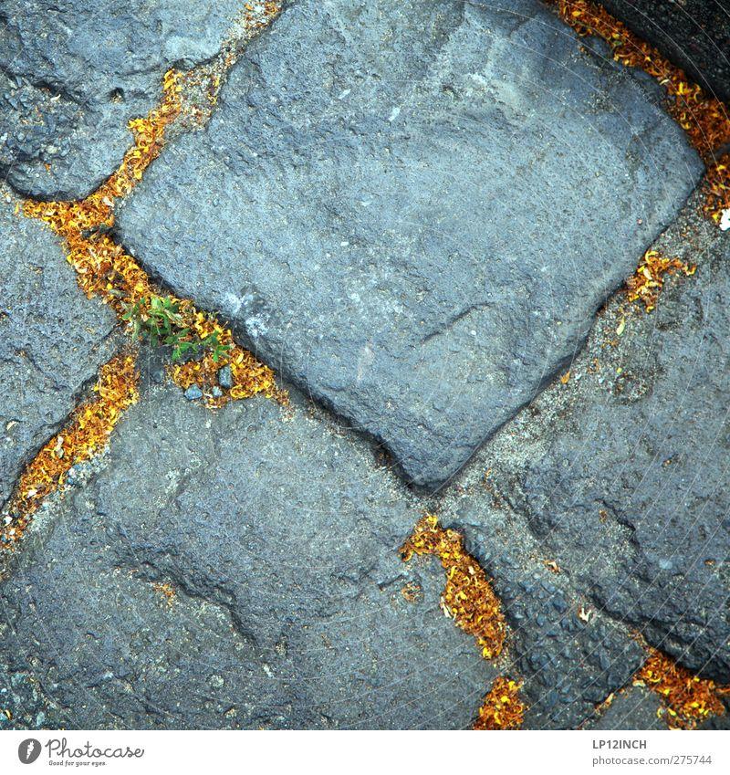 Naturgold Umwelt Tier Sommer Baum Park Stein Pollen Pollenflug Pflastersteine Bodenbelag Farbfoto Außenaufnahme Menschenleer Textfreiraum Mitte Tag