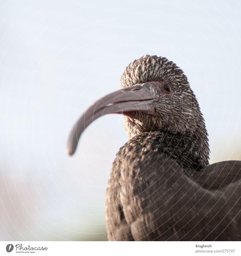 Augenblick VI Tier Vogel braun warten Tiergesicht Wachsamkeit Schnabel achtsam