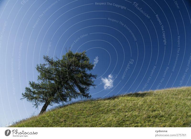 Windrichtung Himmel Natur Ferien & Urlaub & Reisen Sommer Baum Einsamkeit ruhig Erholung Landschaft Umwelt Wiese Gras Freiheit Gesundheit wandern