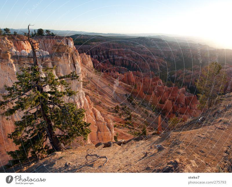 Utah morning Wolkenloser Himmel Schönes Wetter Baum Felsen Berge u. Gebirge Schlucht blau braun rot Horizont Idylle ruhig Ferne Bryce Canyon Farbfoto