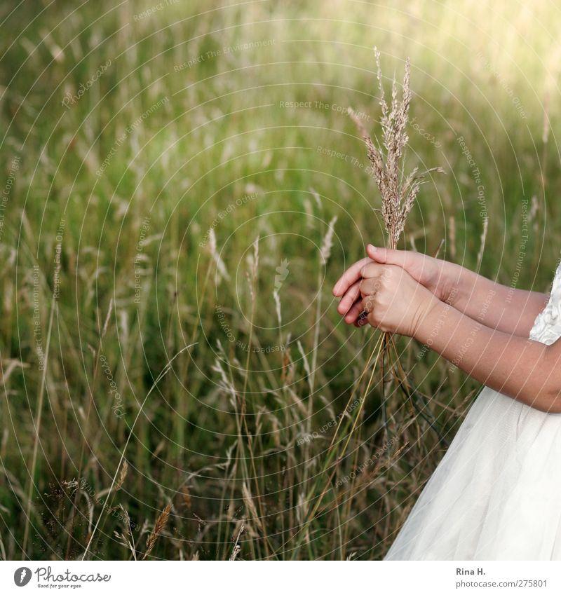 auf der Wiese Kind Mädchen 1 Mensch 3-8 Jahre Kindheit Umwelt Natur Pflanze Sommer Gras Kleid grün weiß pflücken Hand Arme Farbfoto Außenaufnahme Sonnenlicht