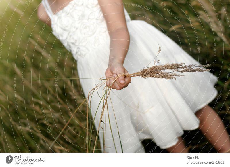 auf der Wiese II Mensch Mädchen Kindheit 1 3-8 Jahre Sommer Gras Kleid grün weiß Natur Farbfoto Außenaufnahme Tag Schwache Tiefenschärfe pflücken Sommerkleid