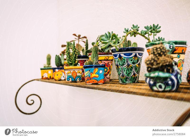 Rustikale Blumentöpfe in Cadaques, Spanien mediterran Haus Garten Topf Dekoration & Verzierung schön Wand Straße weiß Dorf Gebäude Europa Hintergrund heimwärts