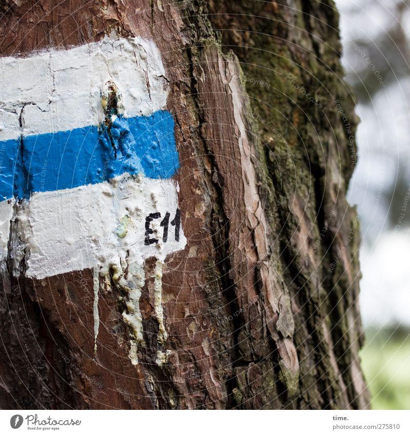 E11 Schönes Wetter Baum Baumstamm Baumrinde Moos Wald Zeichen Ziffern & Zahlen Schilder & Markierungen Hinweisschild Warnschild wandern blau weiß Genauigkeit
