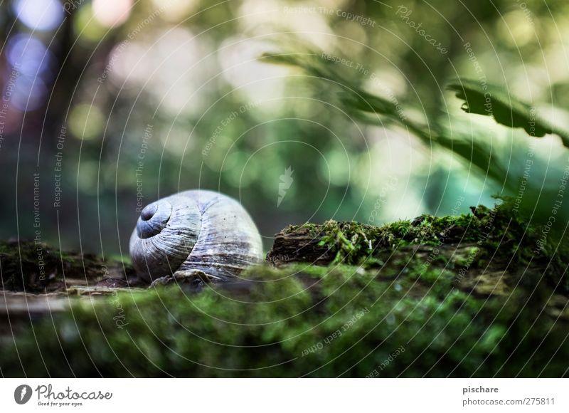 Speed-Schnecke, schläft gerade... Natur Moos Tier schön mehrfarbig grün Romantik Bewegung Geschwindigkeit ruhig Schneckenhaus Unschärfe Farbfoto Außenaufnahme