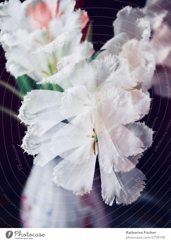 Doppelbelichtung weiße Blumen Tulpen Blumenstrauß Sommer Pflanze schön rot Blatt Winter schwarz Herbst Blüte Frühling Kunst außergewöhnlich orange rosa