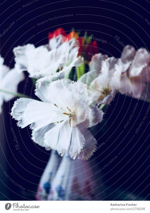 Doppelbelichtung weiße Tulpen rote Tulpen Tulpenstrauß mit Vase Natur Sommer Pflanze grün Blatt Winter Herbst gelb Blüte Frühling orange rosa leuchten Blühend