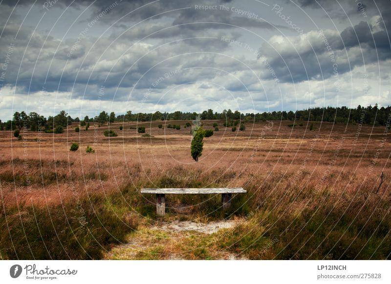 Bank am Arsch der Heide Himmel Natur Ferien & Urlaub & Reisen Sommer Baum Einsamkeit Wolken Erholung Wald Landschaft Ferne Umwelt dunkel Wiese Gras Freiheit