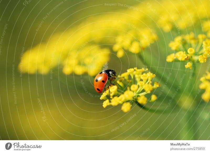 Natur Wasser Sommer Pflanze Sonne Blume Farbe Tier Blatt Erholung Gras Freiheit Blüte Garten Feld Klima