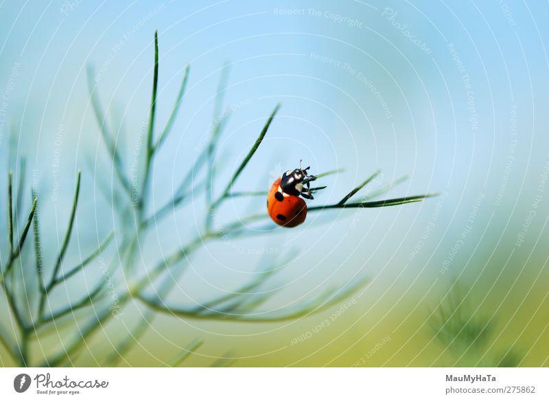 Marienkäfer Natur Pflanze Tier Himmel Horizont Sonnenaufgang Sonnenuntergang Sonnenlicht Sommer Klima Schönes Wetter Blume Gras Blatt Blüte Nutzpflanze Garten