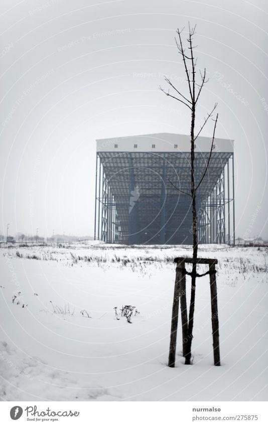 anti Hiddensee Baum Pflanze Einsamkeit Winter Umwelt dunkel kalt Schnee Architektur träumen Kunst Freizeit & Hobby Fabrik Bauwerk skurril frieren