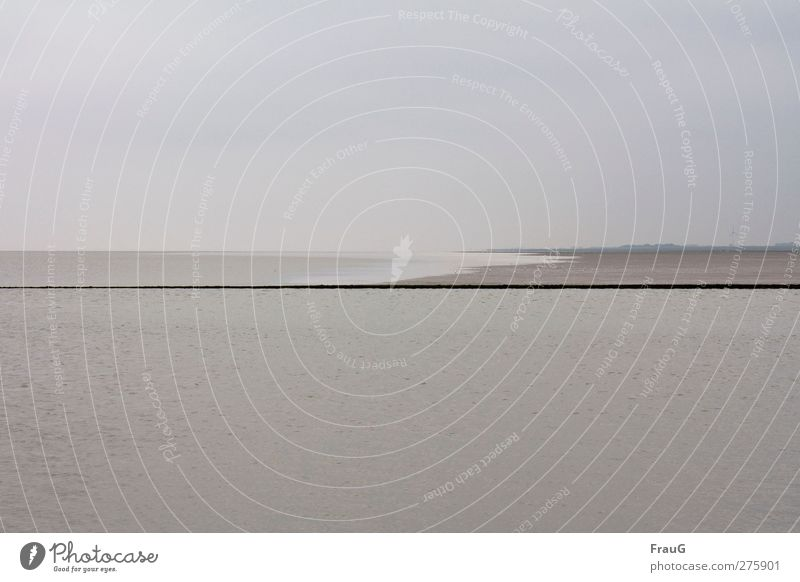 Waterkant Umwelt Wasser Himmel Sommer Meer Nordsee Landkreis Friesland Wattenmeer Möwe Sand Linie grau Wolken trüb Trennlinie Farbfoto Außenaufnahme