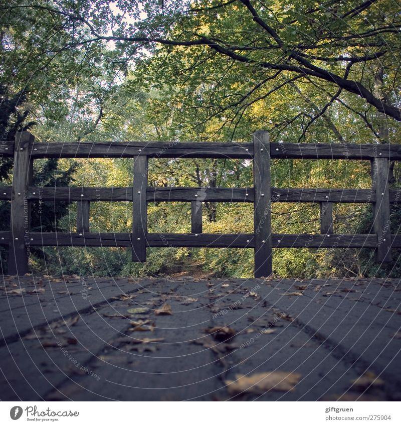 am holzweg Umwelt Natur Pflanze Baum Blatt Wald Nostalgie Herbst Herbstlaub herbstlich Laubbaum Geländer Brückengeländer Holz Holzweg Wege & Pfade Absperrgitter