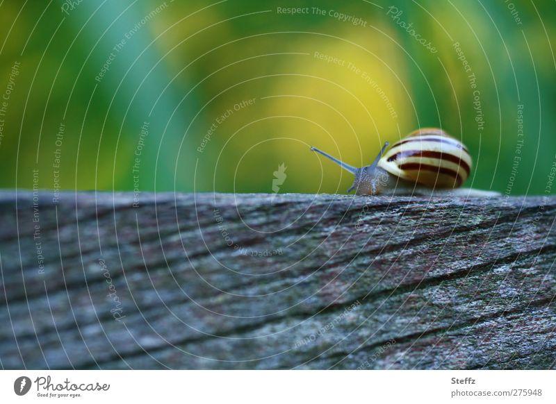 im eigenen Tempo Natur Sommer Tier Holz Streifen Gelassenheit Holzbrett Schnecke krabbeln gestreift langsam Weichtier Schneckenhaus Unschärfe grün-gelb Zeitlupe