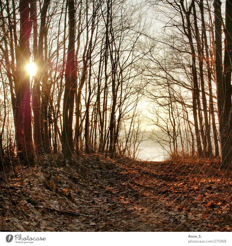 Herbsttag Erholung ruhig Sonne Herbstlaub herbstlich Herbstfärbung Herbstwetter Herbstwald Natur Sonnenlicht Schönes Wetter Baum Blatt Wald Seeufer Stimmung