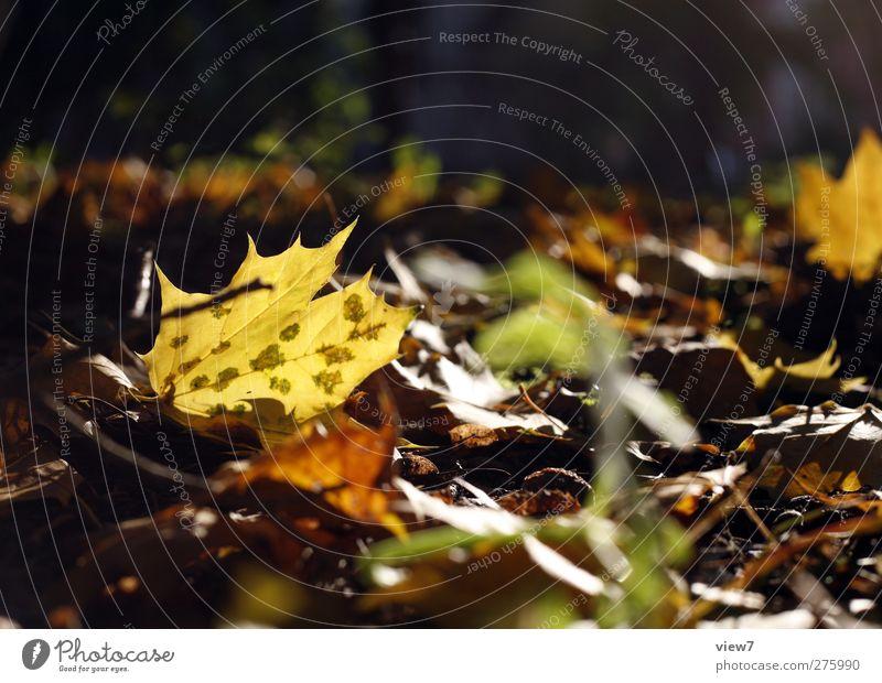 Herbstlich Umwelt Natur Sonne Schönes Wetter Pflanze Blatt alt authentisch einfach braun mehrfarbig schön Beginn Einsamkeit Ende Farbe herbstlich