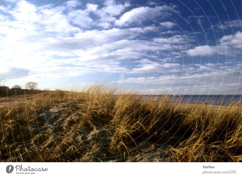 Am weißen Strand von... Rügen Gras Meer Usedom Wolken Pflanze Island Stranddüne Ostsee clouds sea coast shoreline Sand