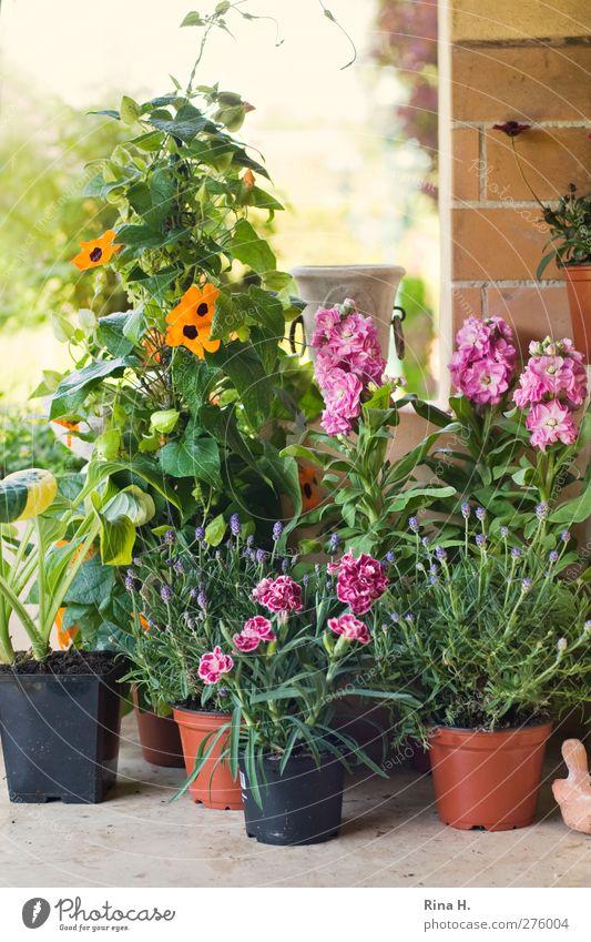 Es fing alles so schön an..... Freude Wohnung Frühling Schönes Wetter Pflanze Blume Garten Mauer Wand Blühend authentisch mehrfarbig Lebensfreude Topfpflanze