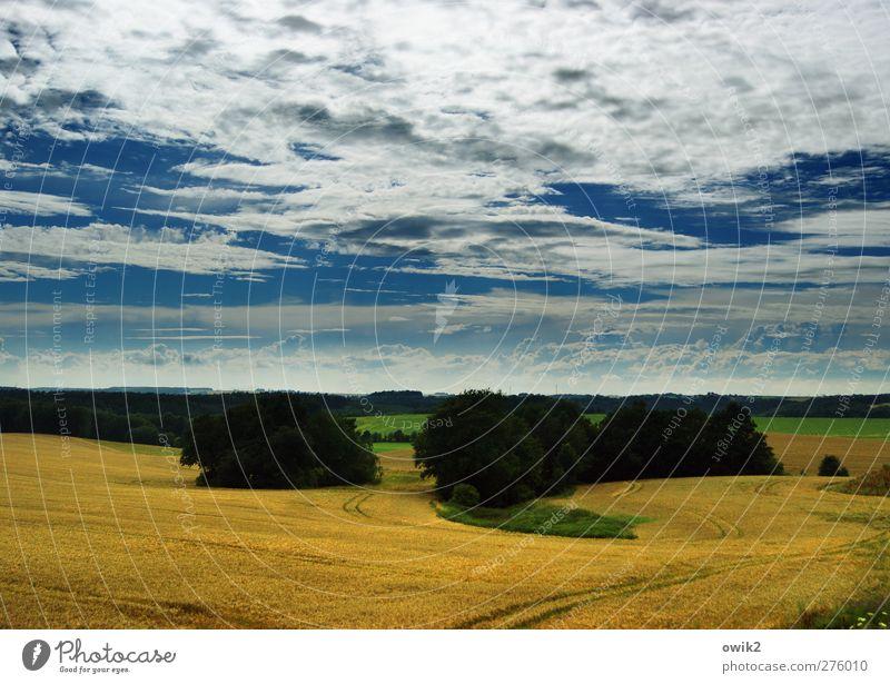 Great Plains of Mitteldeutschland Umwelt Natur Landschaft Pflanze Himmel Wolken Horizont Klima Wetter Schönes Wetter Baum Getreidefeld Feld blau gelb grün weiß