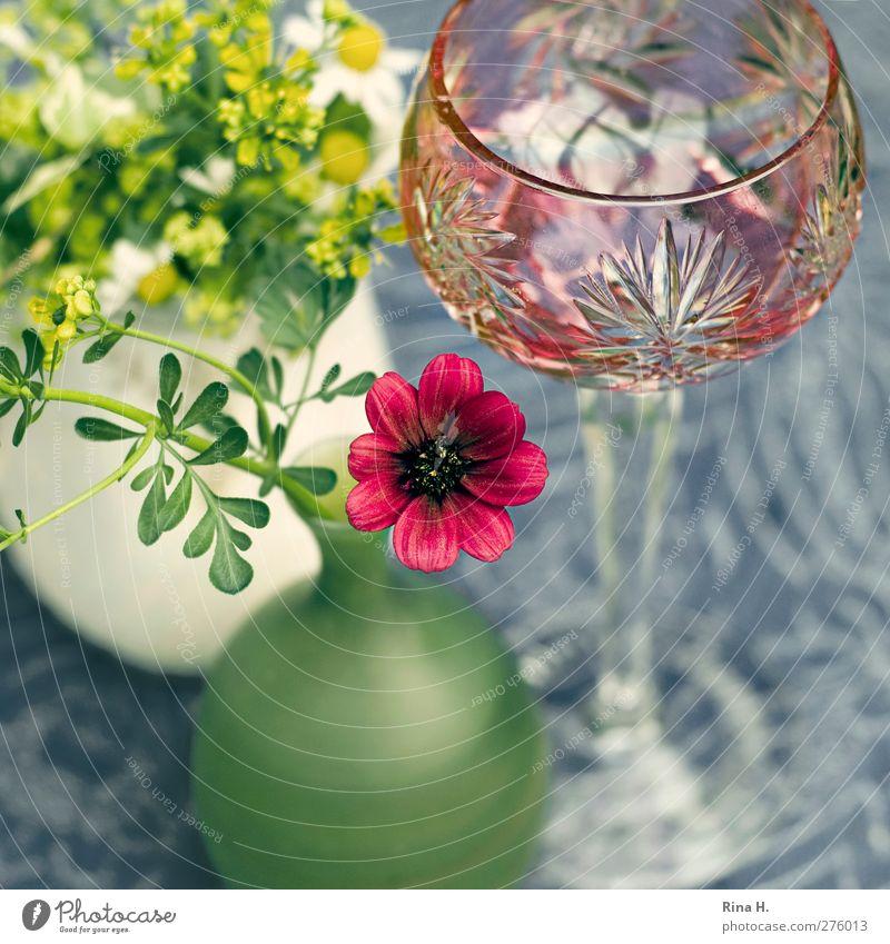Still Glas Weinglass Häusliches Leben Blume Weinraute Schokoladenblume Vase Tischwäsche Tischdekoration Blühend Stillleben Farbfoto Außenaufnahme Menschenleer