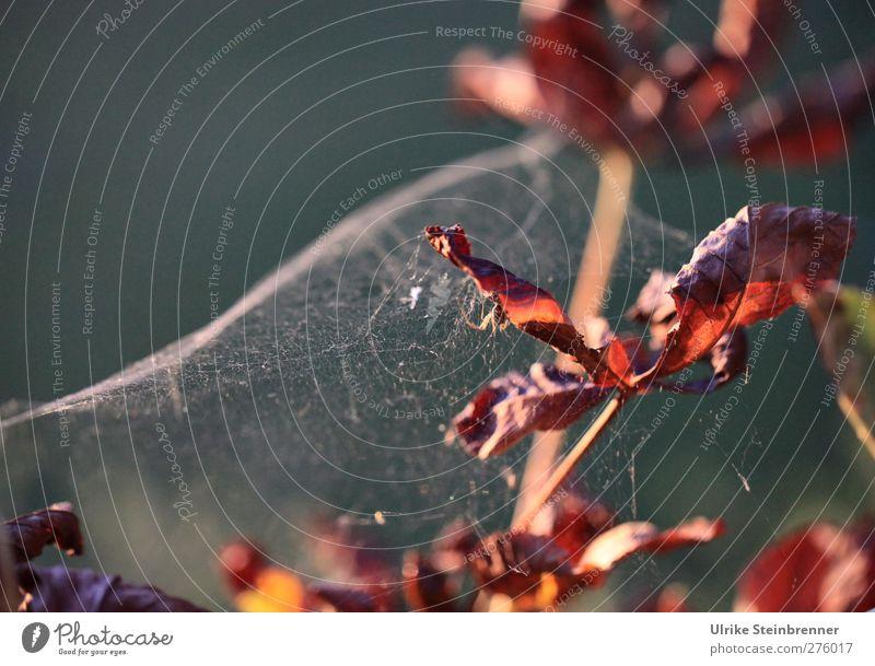 Herbstgespinst II Natur Baum Pflanze Blatt Umwelt Garten Park braun natürlich warten Erfolg leuchten Wandel & Veränderung Schönes Wetter Netzwerk