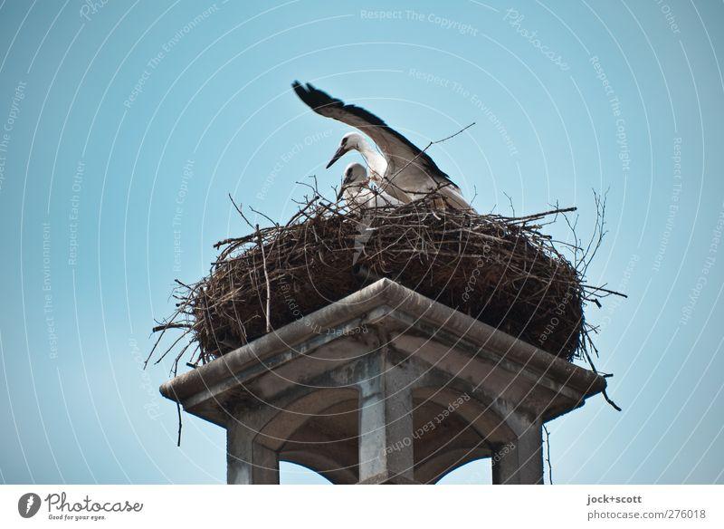 Störche auf dem Schornstein Tier Leben Bewegung natürlich oben Vogel Idylle Häusliches Leben elegant Kraft Wildtier authentisch hoch Flügel planen Sicherheit