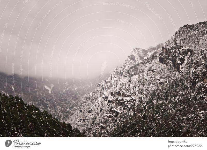 Winter in den Bergen Umwelt Natur Landschaft Klima schlechtes Wetter Unwetter Nebel Eis Frost Schnee Schneefall Pflanze Baum Felsen Berge u. Gebirge Gipfel