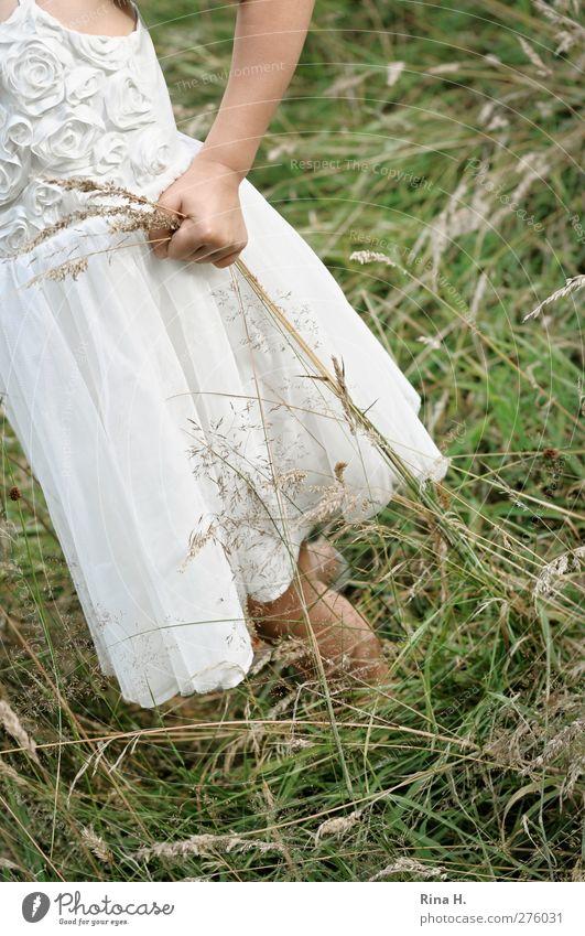 Mein Mensch Kind Natur Sommer Mädchen Wiese Leben Gras Kindheit natürlich einzeln Kleid festhalten Bildausschnitt anonym Anschnitt