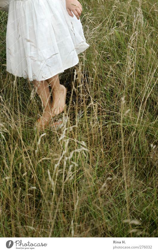 das piekst ! Mädchen 1 Mensch 3-8 Jahre Kind Kindheit Natur Sommer Gras Wiese Kleid gehen Barfuß Suche Farbfoto Schwache Tiefenschärfe Sommerkleid Kinderfuß