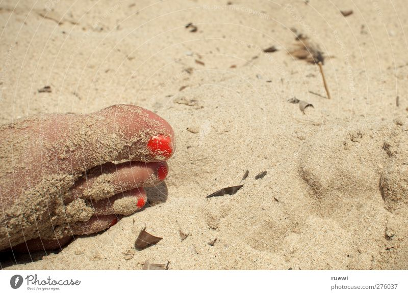 Gelackter Sandfuß Haut Nagellack Freizeit & Hobby Ferien & Urlaub & Reisen Sommer Sommerurlaub Sonnenbad Strand Mensch feminin Junge Frau Jugendliche Erwachsene