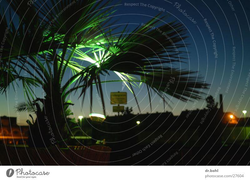 Palmen in Norddeutschland Lichtspiel