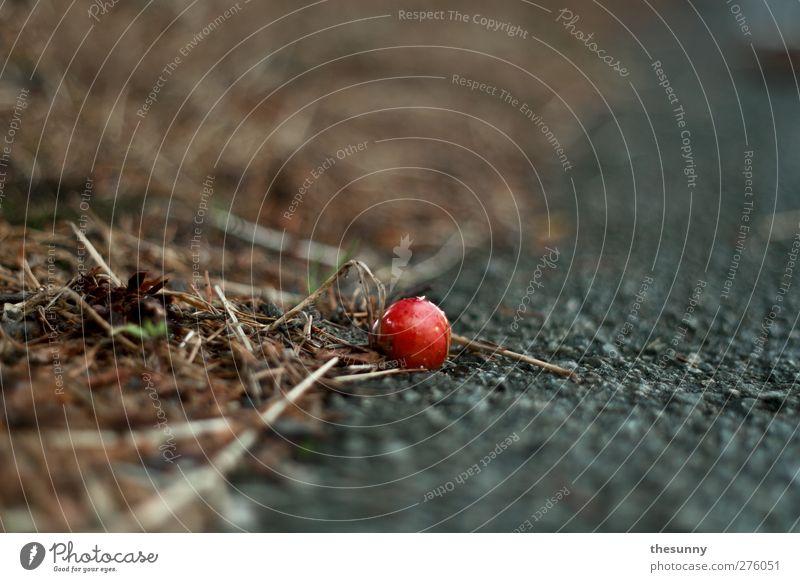 zoom Umwelt Natur Erde Kirsche Asphalt dreckig Duft fallen liegen dehydrieren exotisch fantastisch nah nass rund rot ruhig Interesse Farbfoto Außenaufnahme