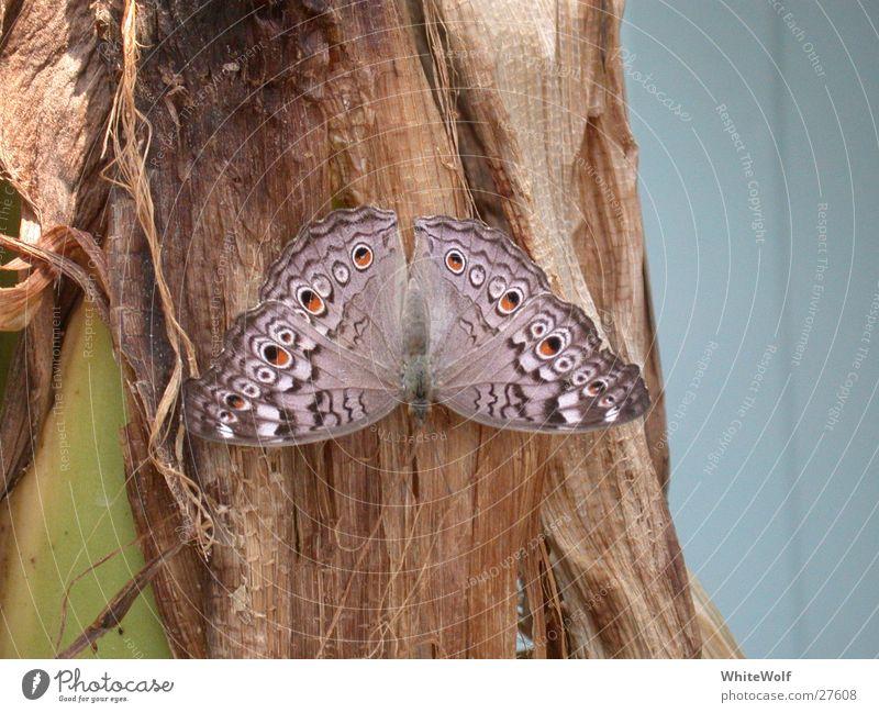 Schmetterling 5 Makroaufnahme Tier fliegen Flügel flattern sitzen Sommer Papiliorama Außenaufnahme