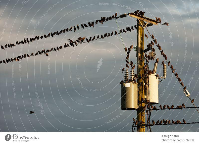 Techno Party Hardware Kabel Energiewirtschaft Himmel Wolken Tier Vogel Schwarm Brunft fliegen sitzen Konflikt & Streit lustig niedlich Hochspannungsleitung