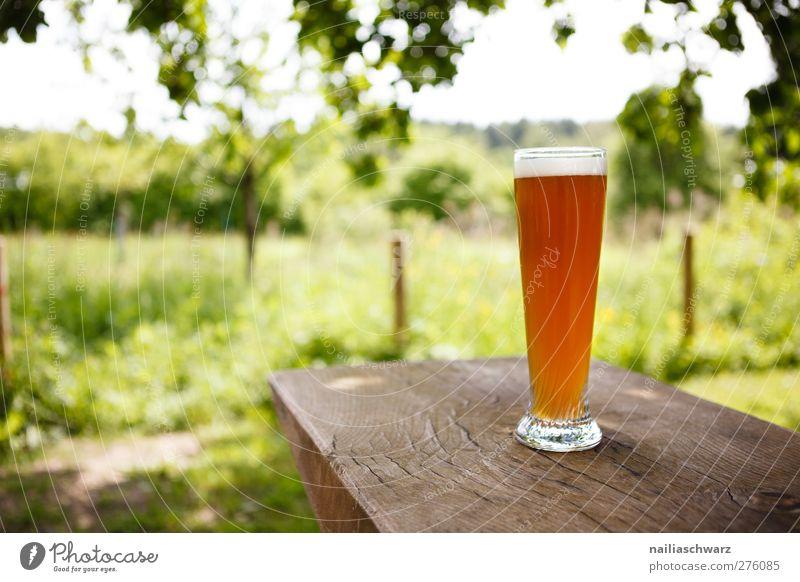 Sommertag Getränk Erfrischungsgetränk Alkohol Bier Landschaft Pflanze Gras Garten Wiese Glas Bierglas Erholung kalt lecker braun gelb grün Frühlingsgefühle