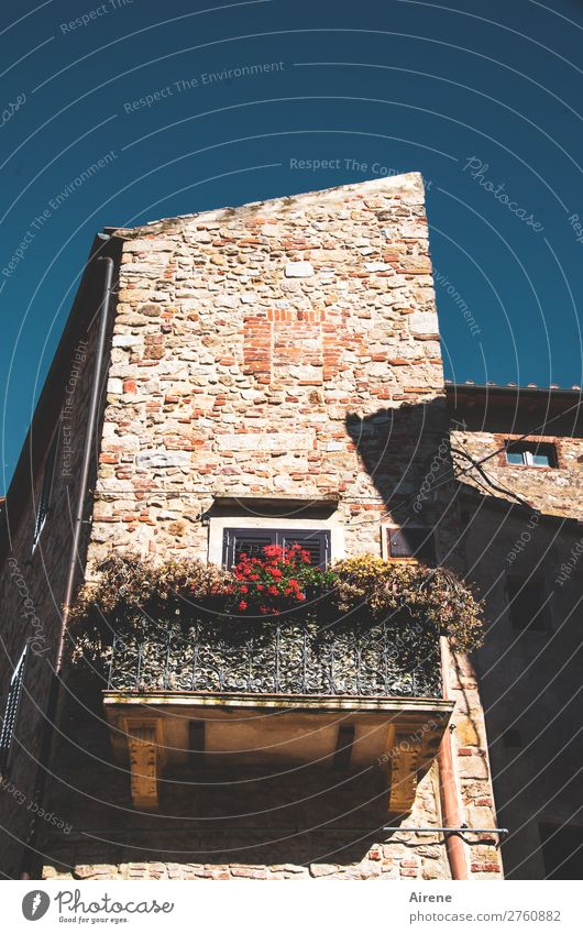 Da ist noch Leben Wolkenloser Himmel Sommer Klimawandel Schönes Wetter Balkonpflanze Pelargonie Toskana Dorf Kleinstadt Altstadt Haus Turm Altbau Mauer Wand