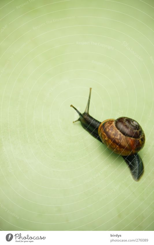 snailway grün schön Tier Leben Bewegung braun elegant ästhetisch Ziel Freundlichkeit rein Schnecke krabbeln vorwärts langsam Schneckenhaus