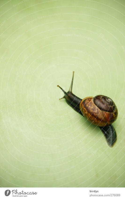 snailway Schnecke 1 Tier Bewegung ästhetisch elegant Freundlichkeit schön braun grün Leben rein Ziel krabbeln Schneckenhaus vorwärts langsam