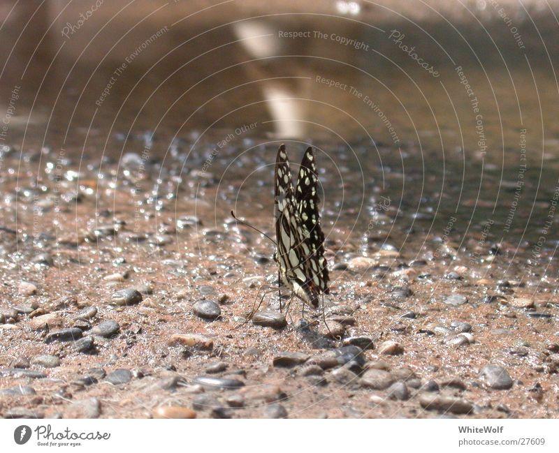 Schmetterling 4 Tier fliegen sitzen Flügel Ausstellung flattern