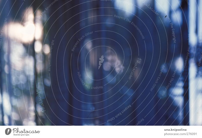mitternachtsblau blau Baum dunkel Innenarchitektur glänzend leuchten Dekoration & Verzierung Häusliches Leben analog Vorhang Gardine Durchblick Lichtpunkt