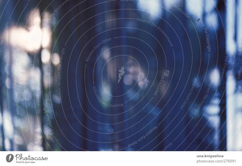 mitternachtsblau Häusliches Leben Innenarchitektur Dekoration & Verzierung Baum glänzend leuchten dunkel Unschärfe Gardine Vorhang Durchblick Lichtpunkt analog