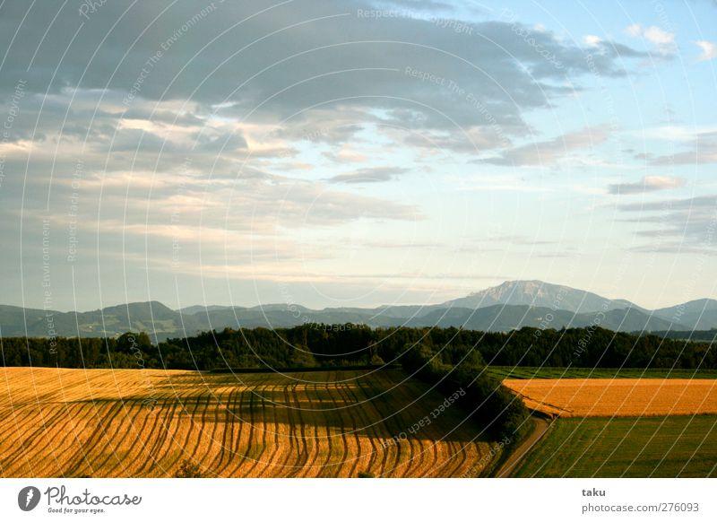 ...LINES... Natur Landschaft Erde Himmel Wolken Sonne Sonnenlicht Sommer Schönes Wetter Feld Hügel Berge u. Gebirge braun gelb gold grün weiß Einsamkeit