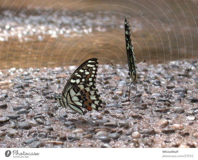 Schmetterling 3 schön Tier fliegen sitzen Flügel flattern