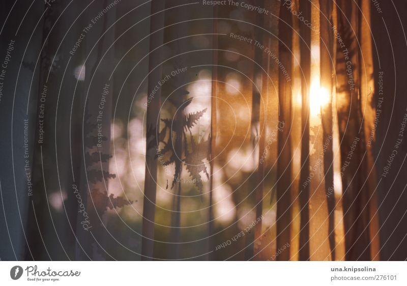 sonnenaufgangsorange Häusliches Leben Wohnung Innenarchitektur Dekoration & Verzierung Blatt Stoff glänzend leuchten hell natürlich gelb gold Vorhang Gardine
