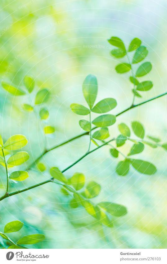 Blattwerk Natur grün Sommer Pflanze frisch Grünpflanze