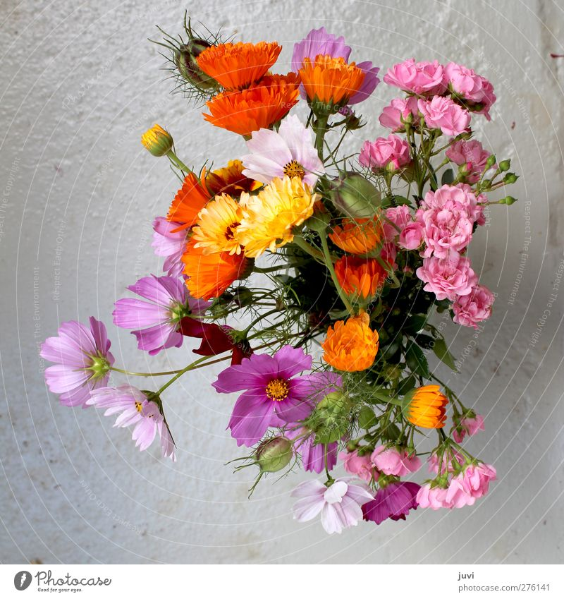 Gartenblumen Pflanze Blume Rose Blüte Wildpflanze Blumenstrauß Beton grau grün violett orange rosa Stillleben Ringelblume Korbblütengewächs Farbfoto