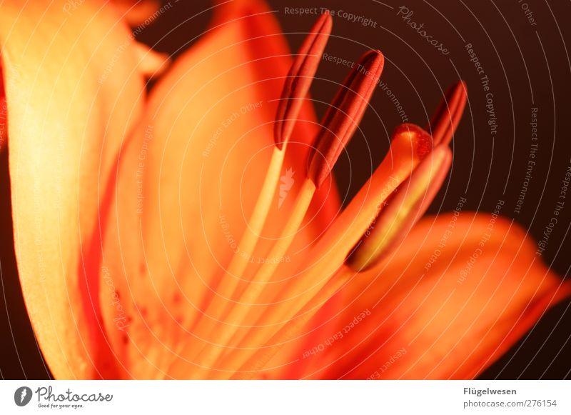 Sag's durch die Blume Lifestyle Pflanze Gras Sträucher Rose Tulpe Efeu Kaktus Orchidee Blatt Blüte Nutzpflanze Wildpflanze Topfpflanze exotisch Blühend